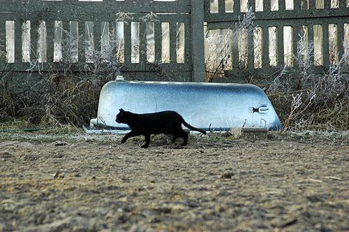 kocie na mokrym